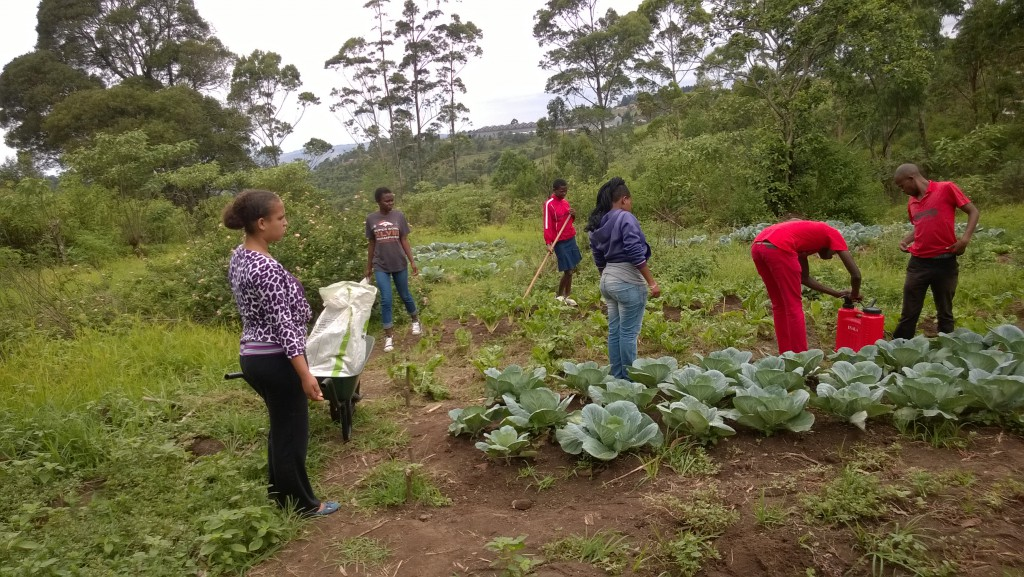Green Valentines for the Diocese of Swaziland
