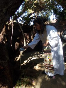 tree eucharist