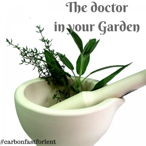 Dr in your Garden (1)