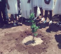 Plant a Confirmation tree at St. Mark the Evangelist