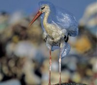 March 21 – Say No To Plastic Packaging