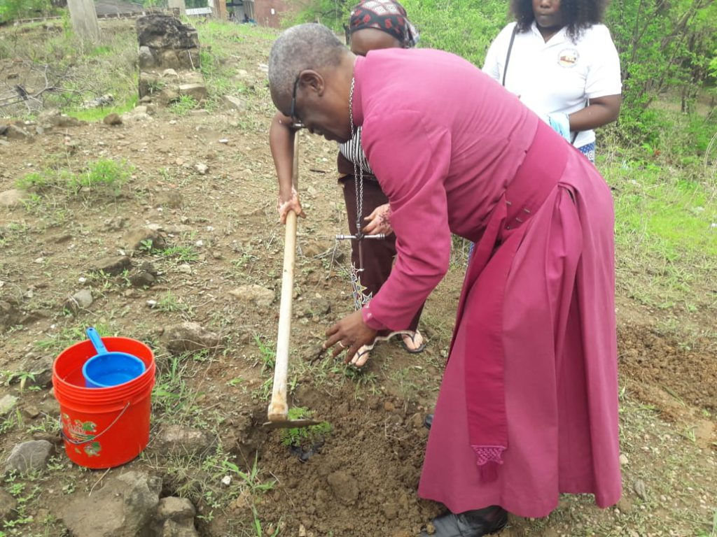Opening of Restored Cathedral starts with tree planting