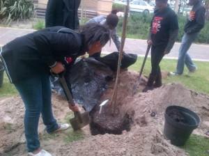 digging  tree