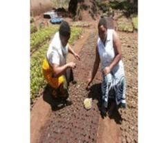 mu planting seedling