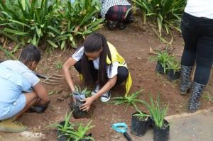 a planting