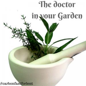 Dr in your Garden (1)