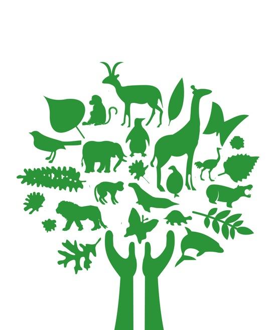 High resolution Africa tree Image