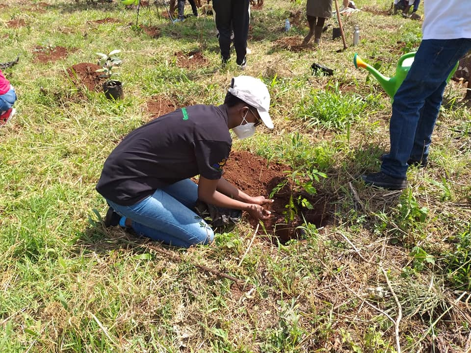 Planting of trees